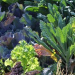 Food_Garden_Back_Yard
