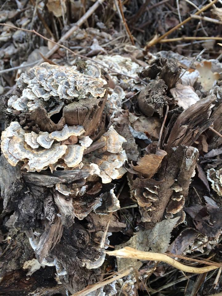 Fungal Inoculation