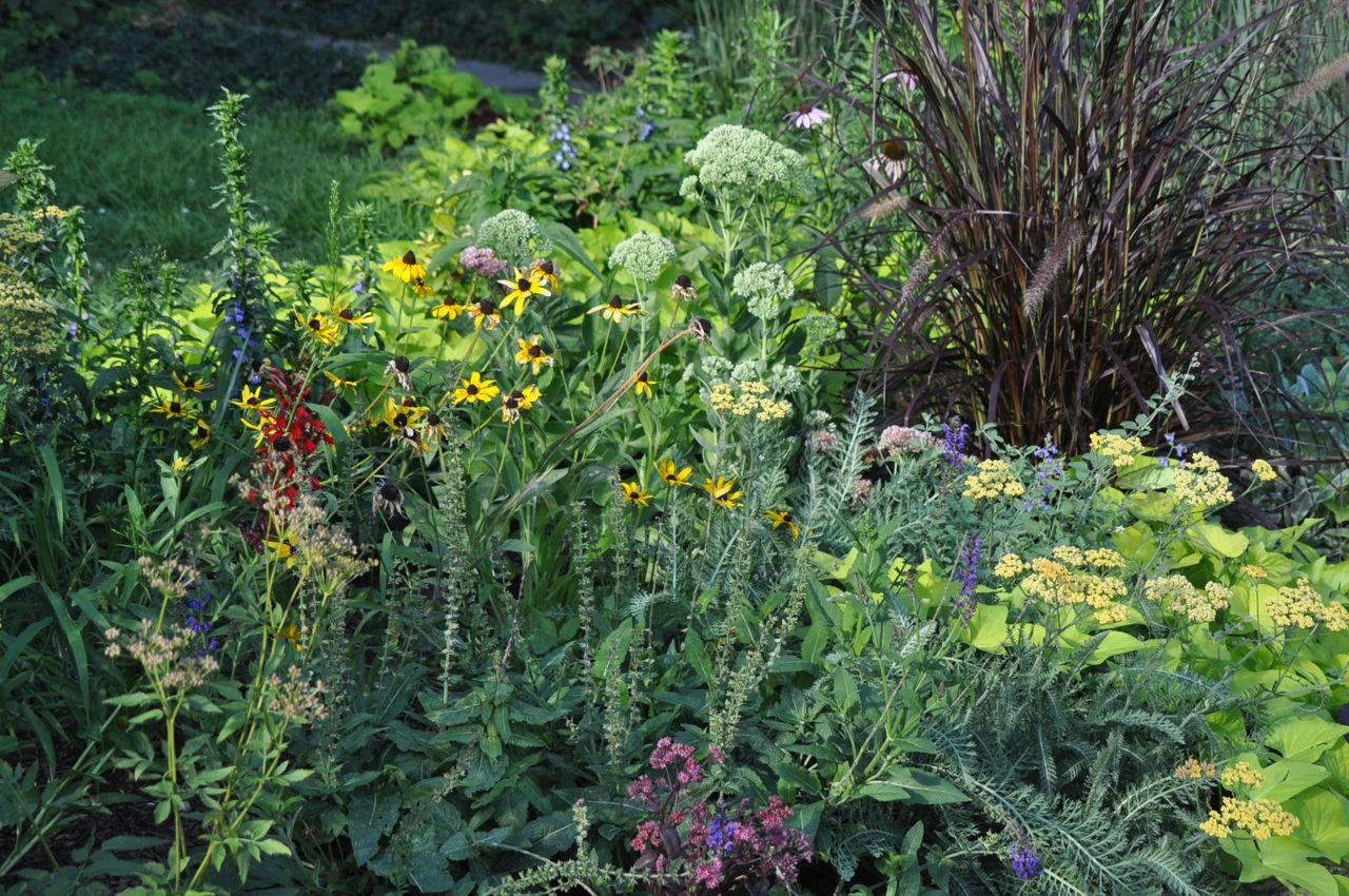 perennial_butterfly_gardening_minnesota.jpg