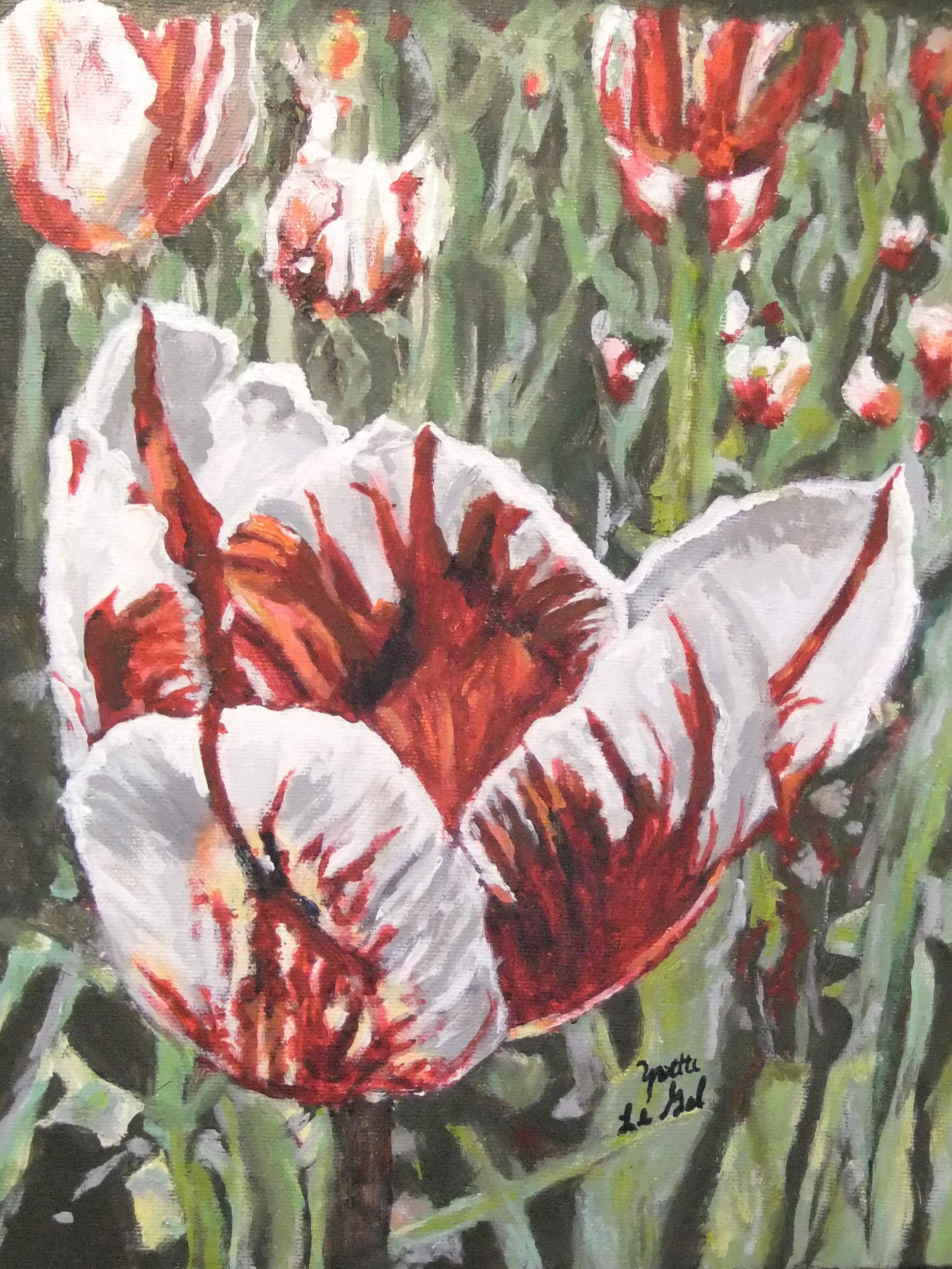 150th Anniversary Tulip