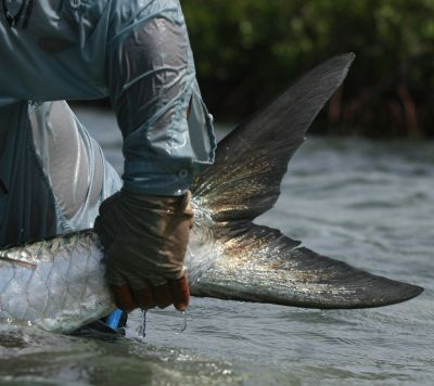 Fly Fishing for tarpon in Belize at Turneffe Flats