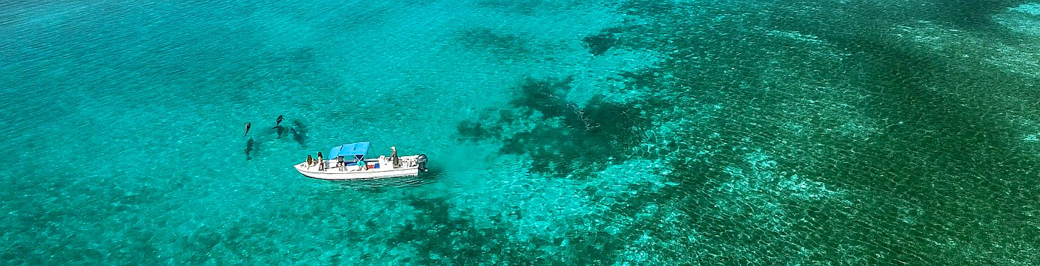 Eco-tours in Belize, Dolphin and Manatee tours at Turneffe Atoll