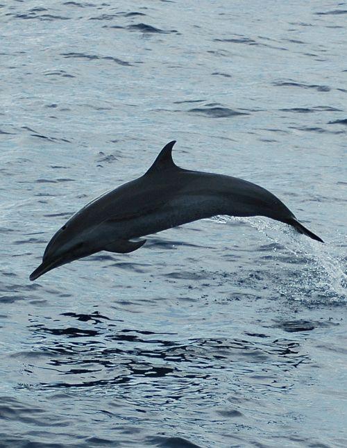 Eco-adventures dolphins tours