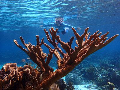 snorkeling over elkhorn coral