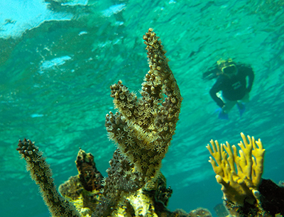 snorkeler with soft coral in Belize
