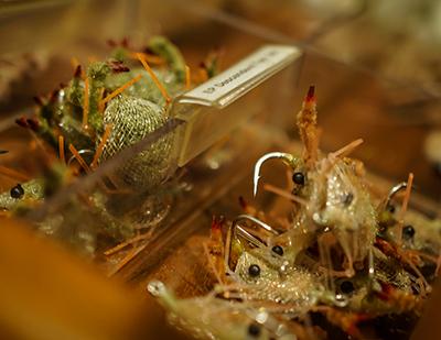 Bonefish Bitters Amber #8  Bonefish Permit
