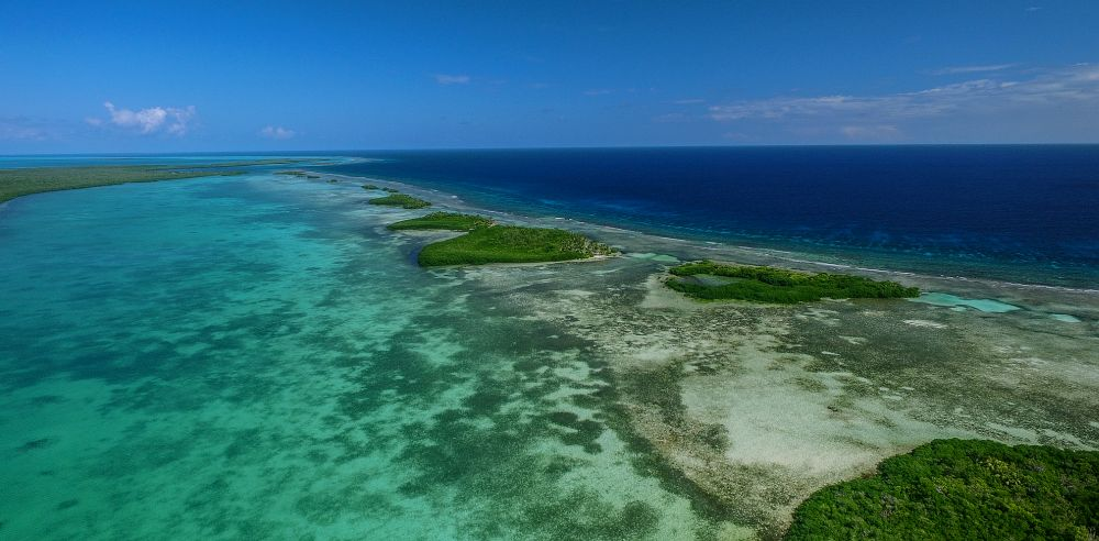 Turneffe Atoll is home to great habitat for bonefish, permit, and tarpon, as well as manatee, dolphins and many species of reef creatures.