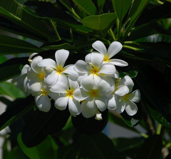 Belize flowers at the lodge