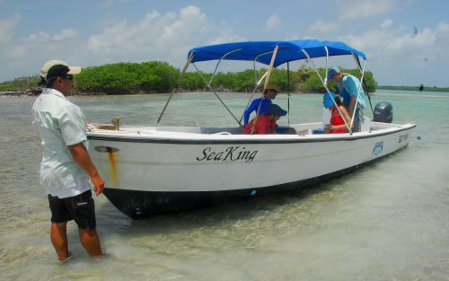 Boat tours for dolphins and manatees in Belize