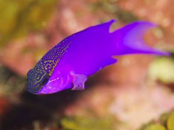 The fish of the coral reefs