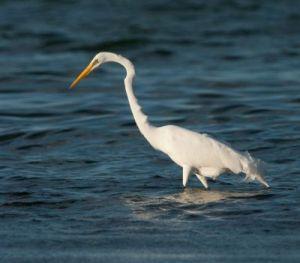 Turneffe Flats - Birding in Belize