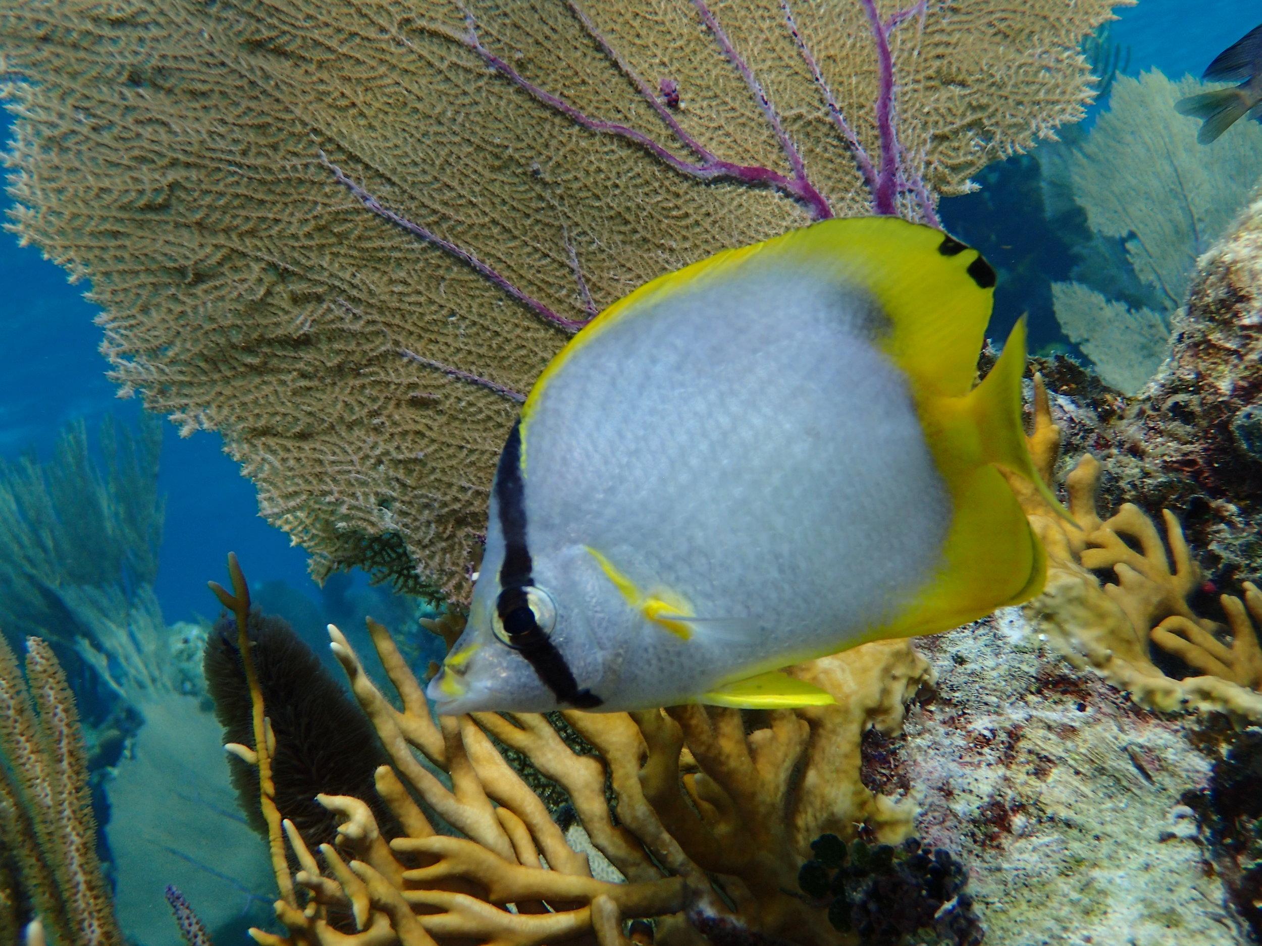 Turneffe Flats Belize Snorkeling