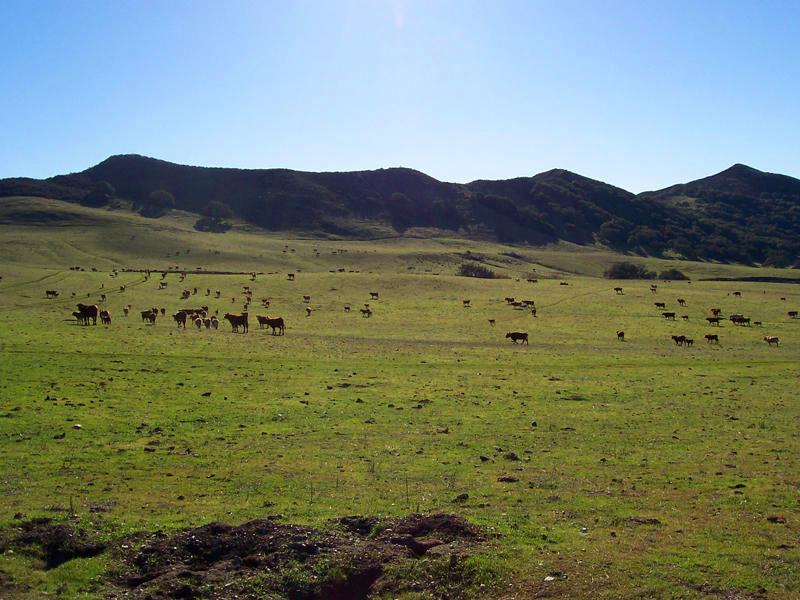 SOLD: $5,000,000  Represented Buyer  3380 CA 135 Los Alamos, CA 93455 821 acres