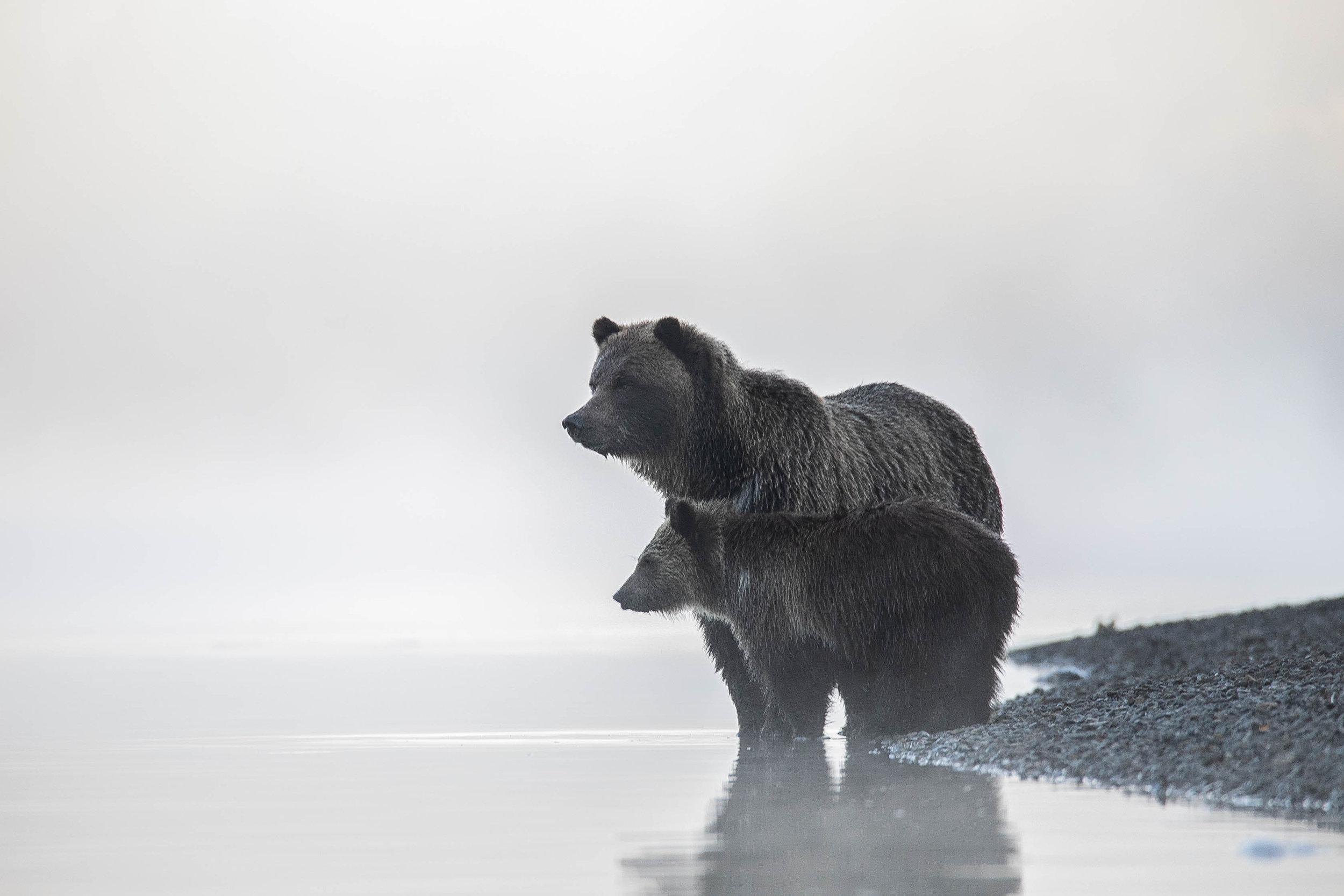 BEAR CAMP 1.jpg