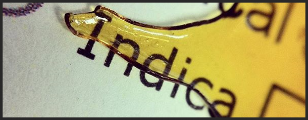 Medical Indica Extract Label Covered by Golden Shatter Dab