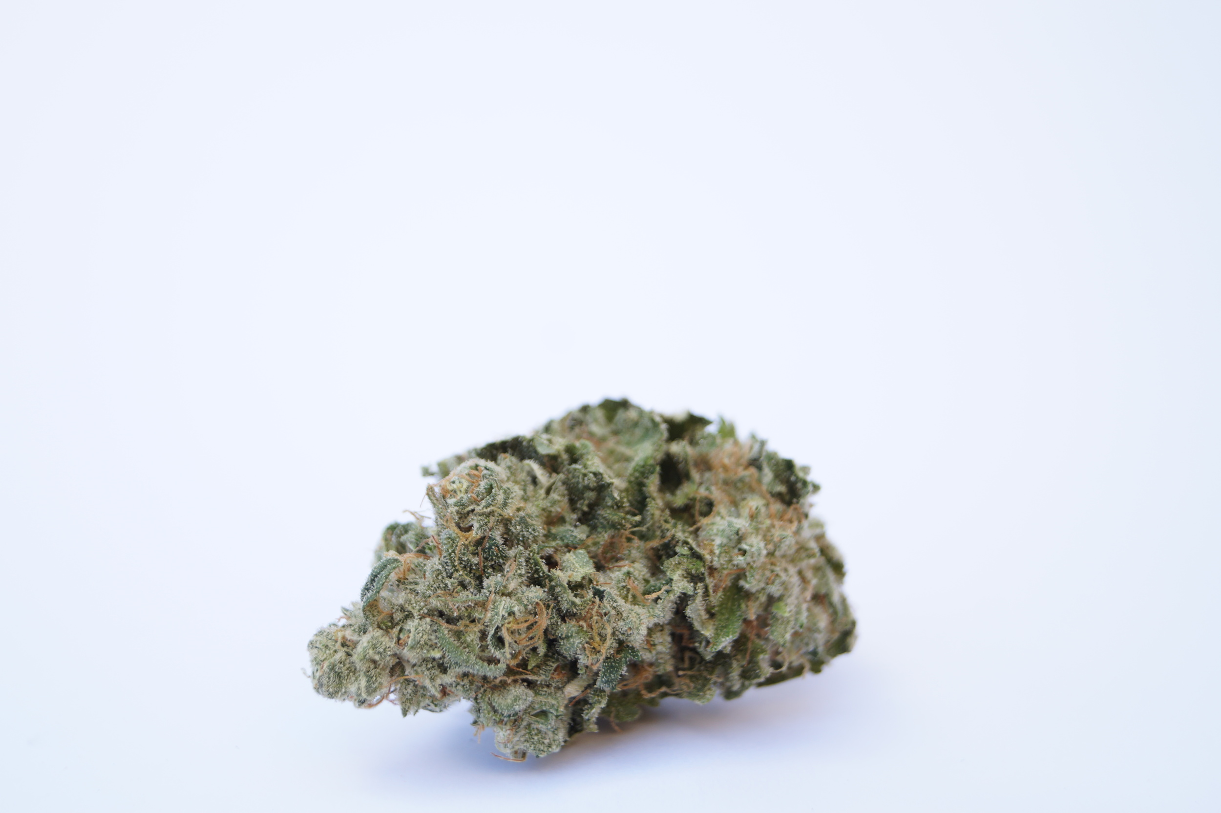 frosted cannabis nug white background MTF Strin