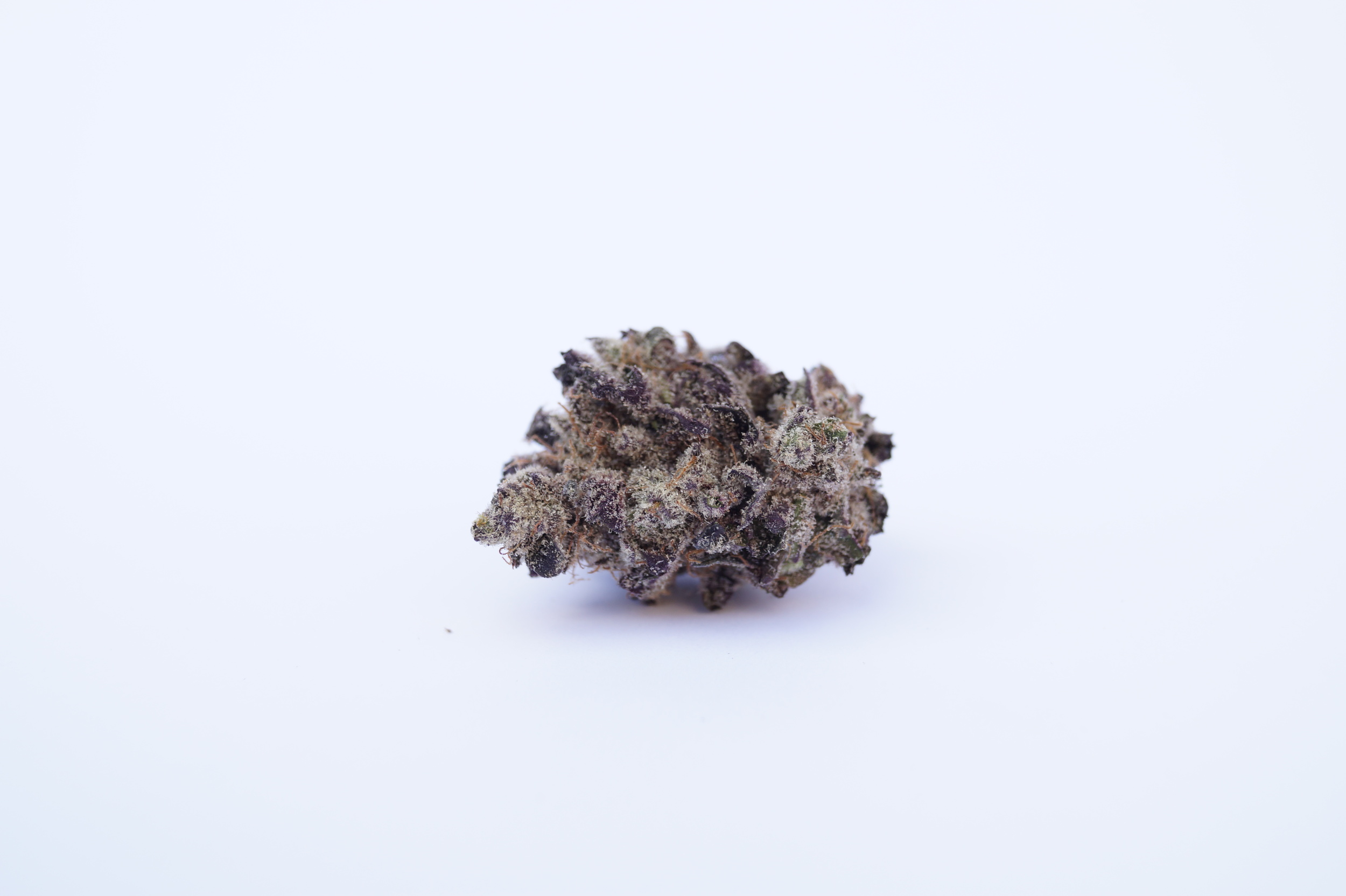 spindle frosty purple cannabis on white background blackberry trainwreck strain