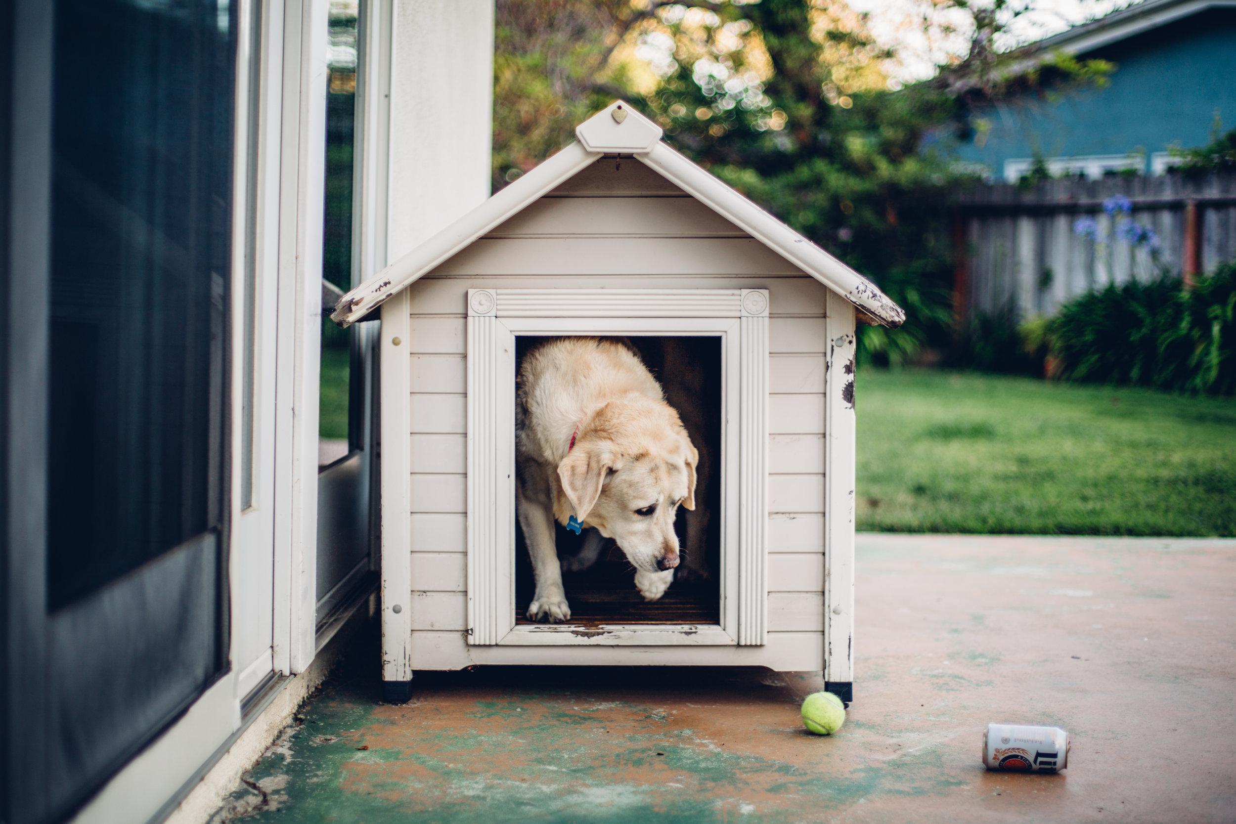 Echo Dog House.jpg