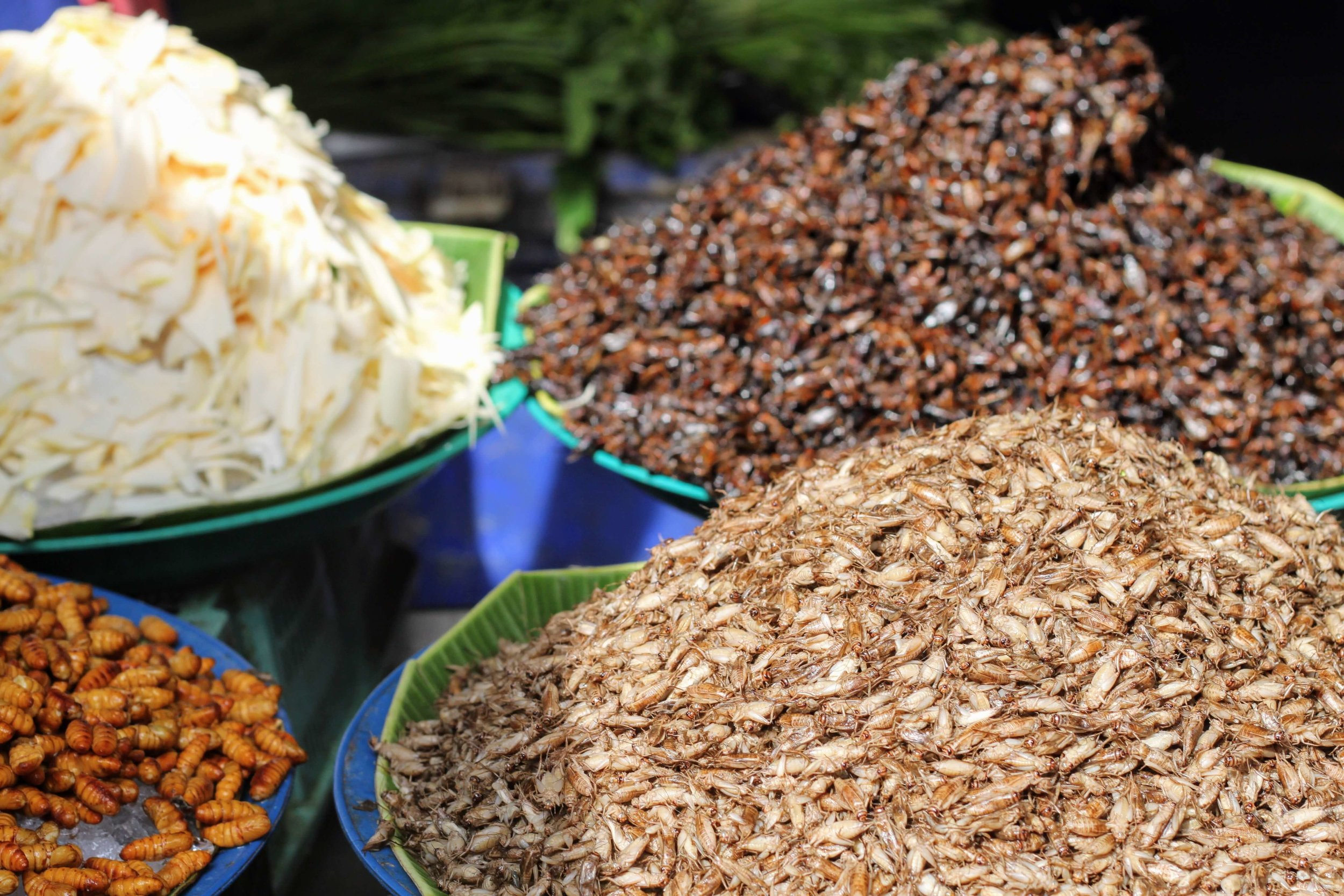 Fresh insects on ice for sale at Khlong Toei market in Bangkok.