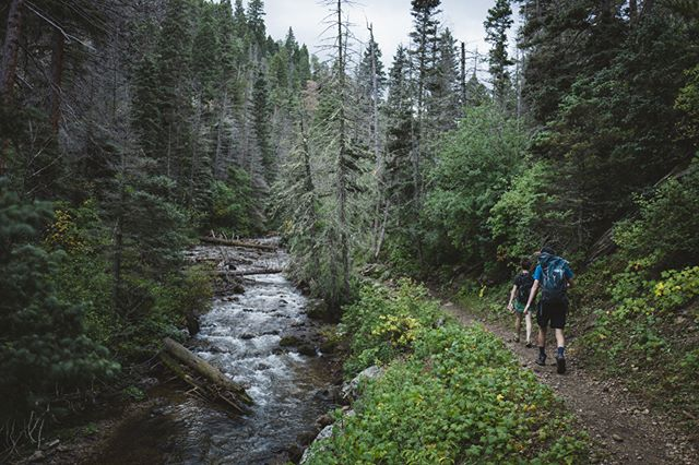 The forests are open again. Where are you going hiking? #NewMexicoTRUE   Photo: @ryanheff7   NewMexico.org