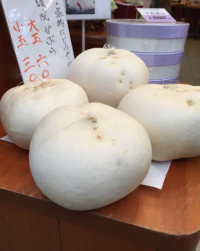 Spotted this huge Kabu Turnip at Nishiki Market in Kyoto, Japan. #kabu #turnip #vegetables #food art #takuwan #produce #yasai #vegan #japan vegetables