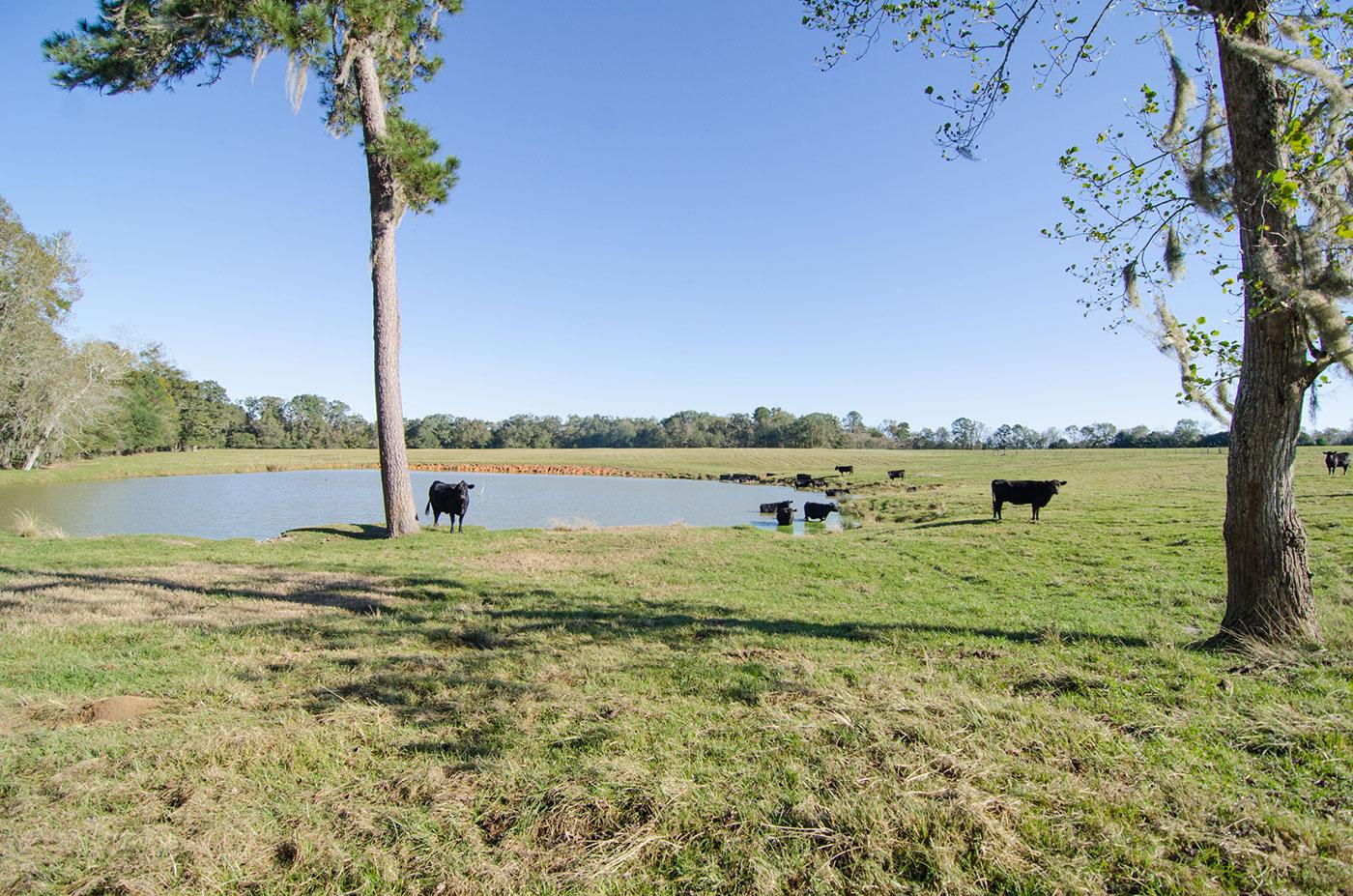 pasture_farm_cattle_pond_web.jpg