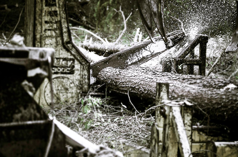 Timber thinning