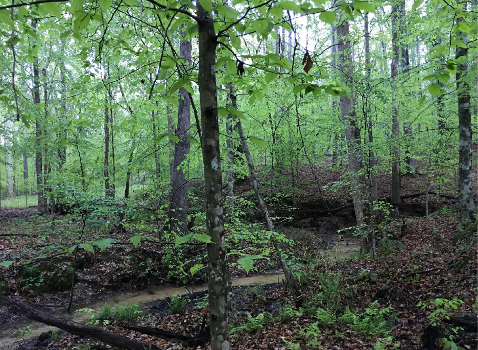 3riversrealty,plantation,middle-georgia-farm,secluded-living,private-get-away,mills-brock,georgia-land-for-sale,creek2.jpg