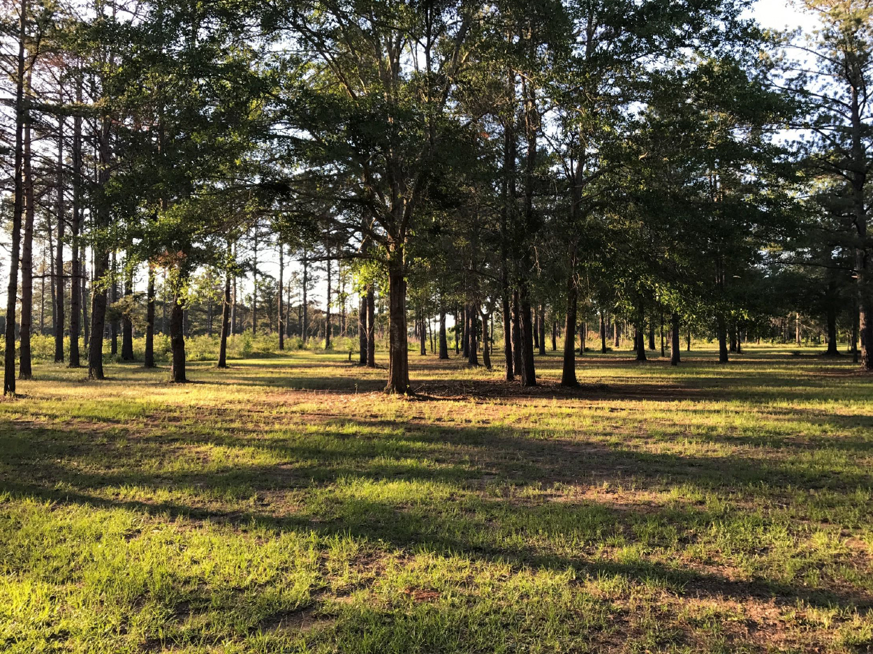 3riversrealty,plantation,middle-georgia-farm,secluded-living,private-get-away,mills-brock,georgia-land-for-sale,pasture2.jpg