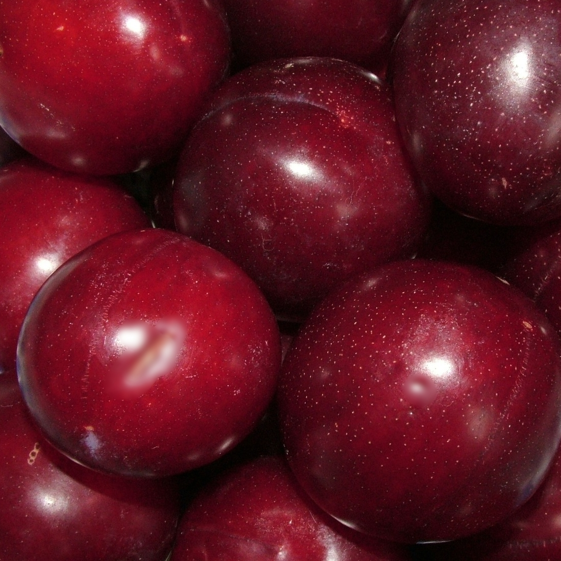 BC PLUMS