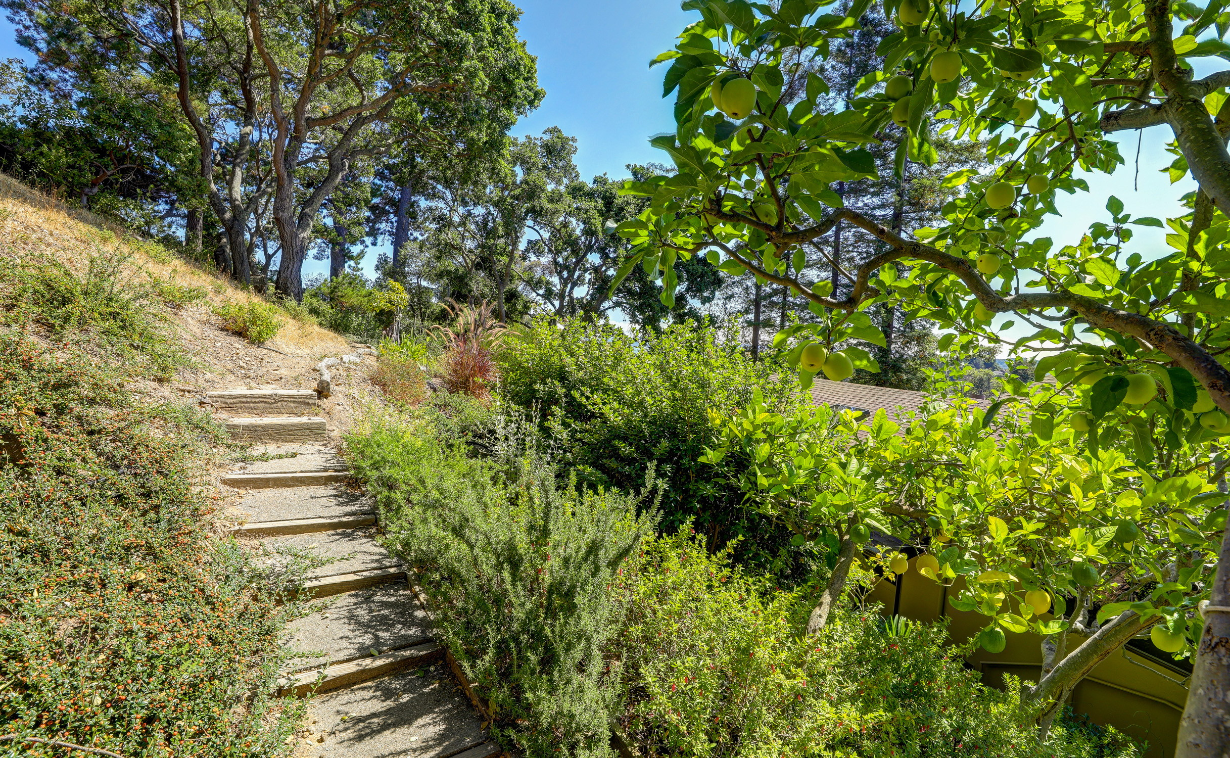 16Dorian 81 MLSSan Rafael Real Estate - Listed by Julia Fitzpatrick + Allie Fornesi Team Own Marin County .jpg