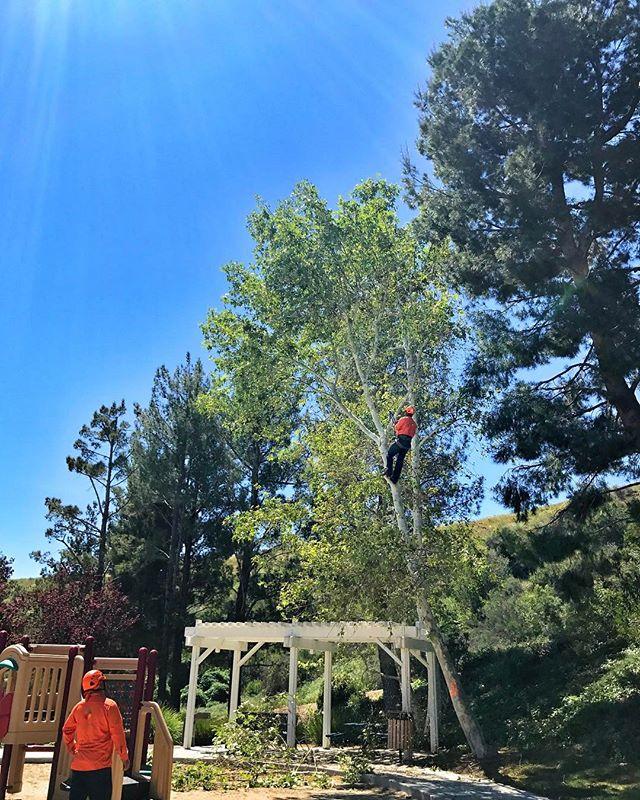 #fslps #treecare #treeremoval #landscape - 30 year veteran @ work