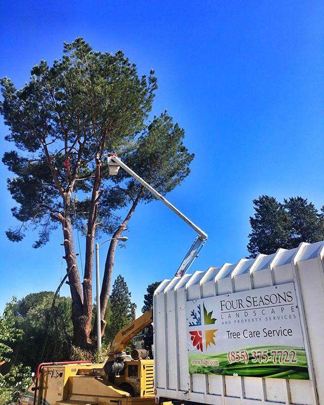 #fslps #treecare @cityofsantaclarita #arborist #treestagram