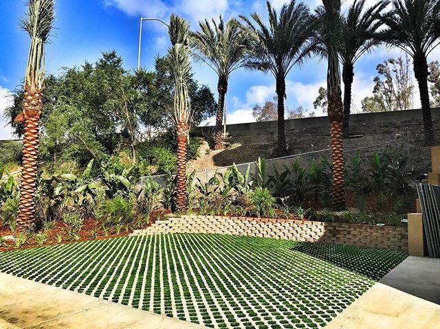 Brand new #syntheticturf turf block and #palmtree install in #downtownla #dtla #fslps #landscape #waterwise #droughttolerant #downtown #urbanlandscape #landscapedesign