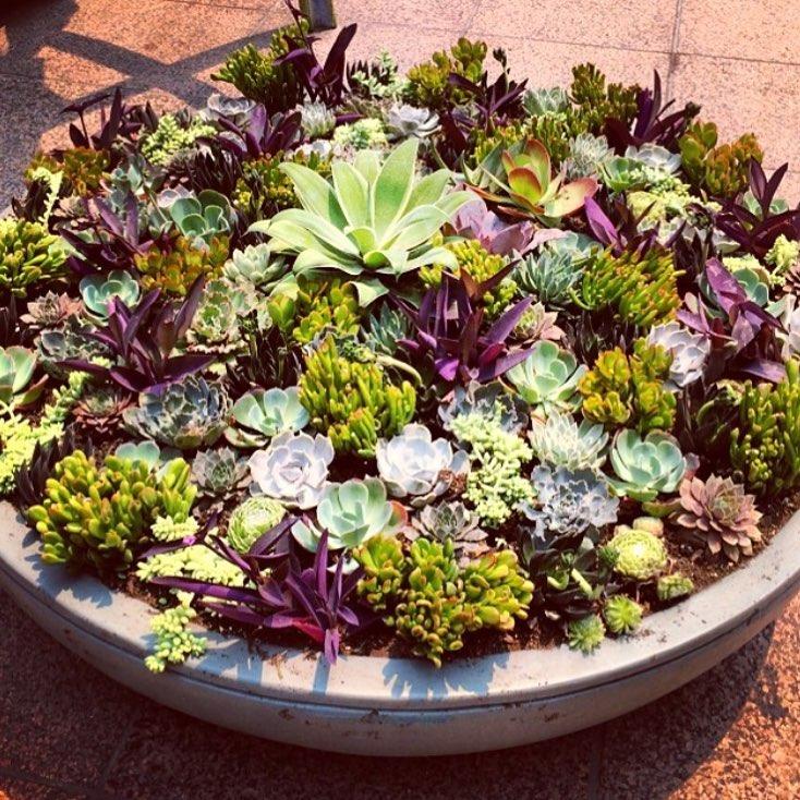 succulent bowl.jpg
