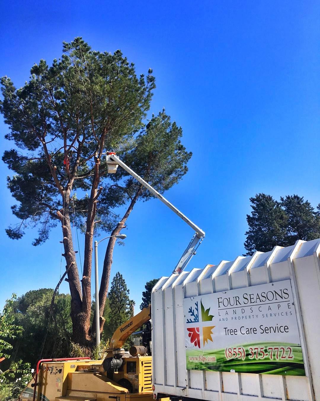 Tree Care - Pruning.jpg