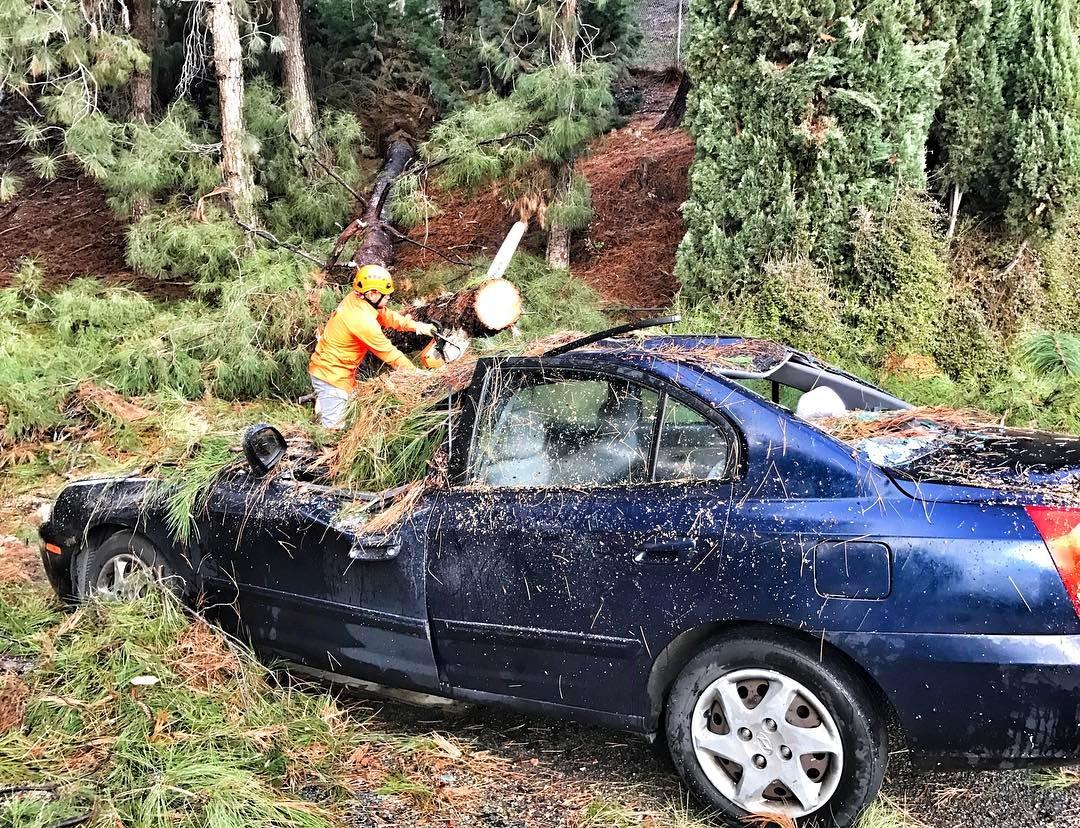 Tree Care Emergency.jpg