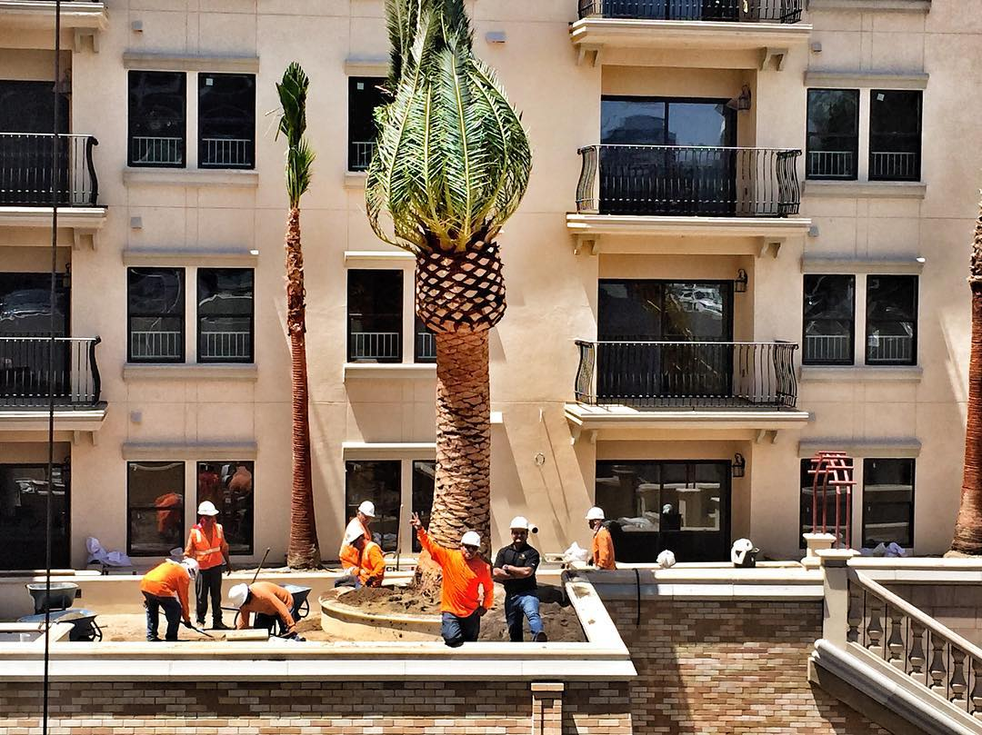 Rooftop Palm Installation, Los Angeles