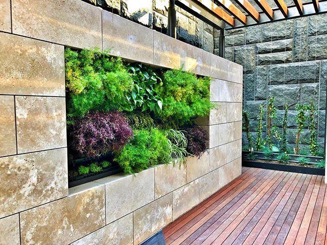 New mini #greenwall in #downtownla #livewall #fslps #landscape #landscapedesign #landscapersofinstagram