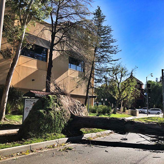 #fslps #treecare #emergency @cityofsantaclarita #landscape