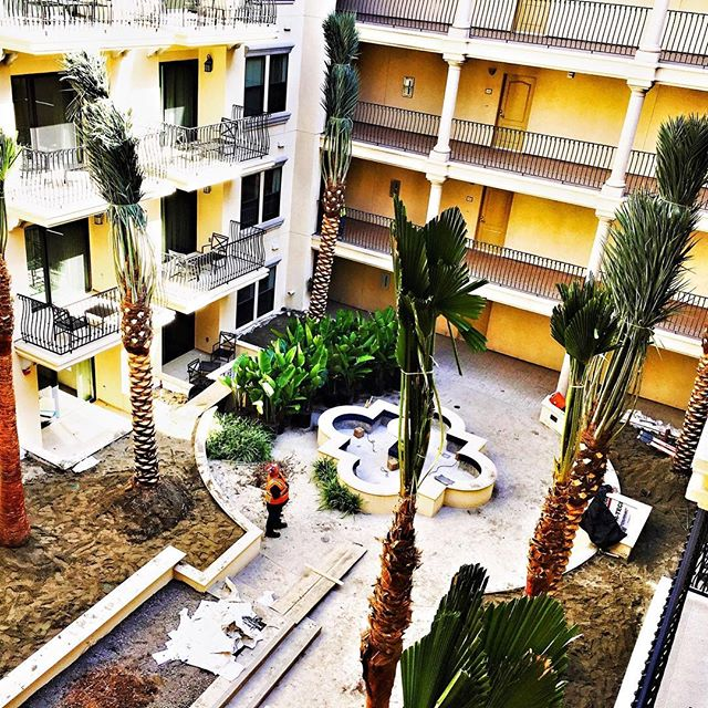 #tbt #palmtree and plant install in #downtownla ⠀ #dtla #landscapeinstallation #landscapedesign #fslps