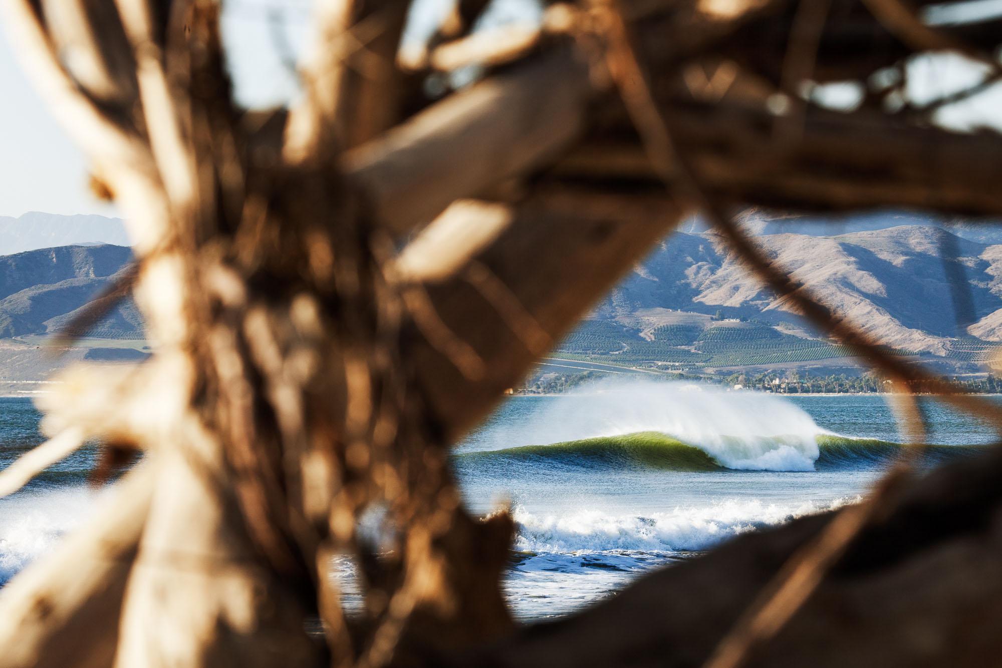 Ventura_tree_frame.jpg