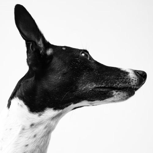 Dog-Portraits-1.jpg