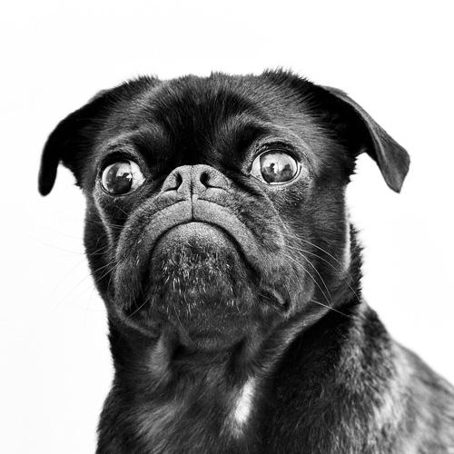 Dog-Portraits-2.jpg