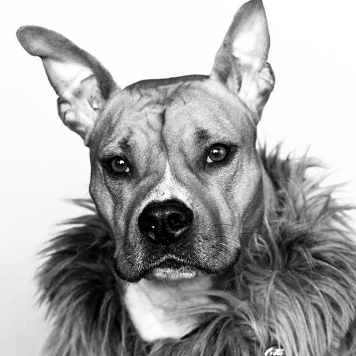 Dog-Portraits-3.jpg