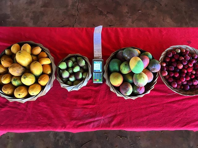 You can get all this and much more with EBT at the Hale Puna Farmers Market today and every Thursday afternoon 3:30-5:30 ! #foodstamps #ebt #papaya #fig #mango #plum #lilikoi #lime #mulberry #pumpkin #pomegranate #localfarm #farmersmarketebt