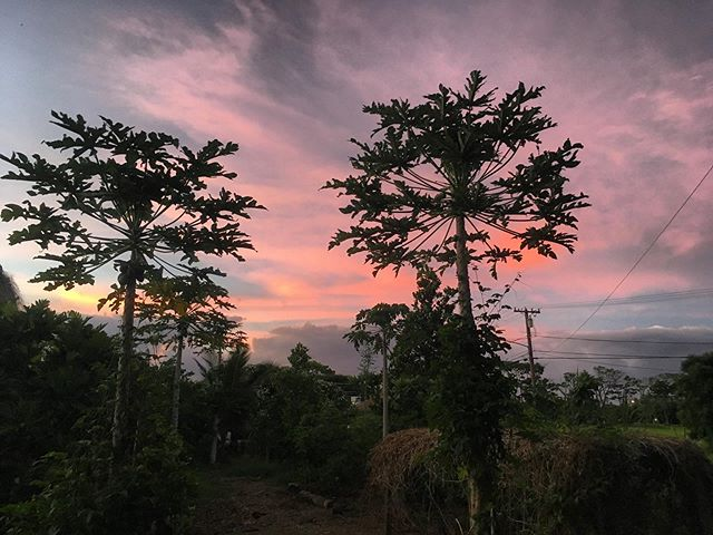 Sunrise on the farm - Don't forget Farmers Market today 3:30-5:30! We accept foodstamps! #papaya #fig #farmersmarket #kauaifarmersmarket #foodstamps #ebt #weacceptebt #freefood #cheapfood #healthyfood #localfood