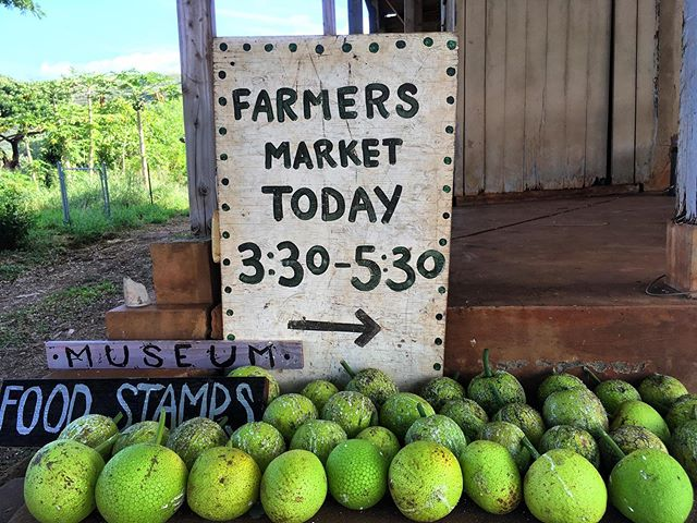 Two varieties of 'ulu 🍈harvest today from two three year old trees! Half price for EBT customers! Come get today and practice your recipes for our first ever 'ULU COOKOFF - Saturday November 23 during the third annual @kauaioldtime gathering bring an 'ulu dish to CCC Camp up Kōke'e 11:30am for a chance to win awesome prizes from favorite local business! Register an 'ulu dish at kauaioldtime.com/ulu-cookoff for free entry to the Kauai Old Time Gathering this year! #farmersmarket #ulu #roastorfry #breadfruit #ulucookoff #kauaioldtime #freefestival #musicfestival #foodfestival #westkauai #hawaiianfood