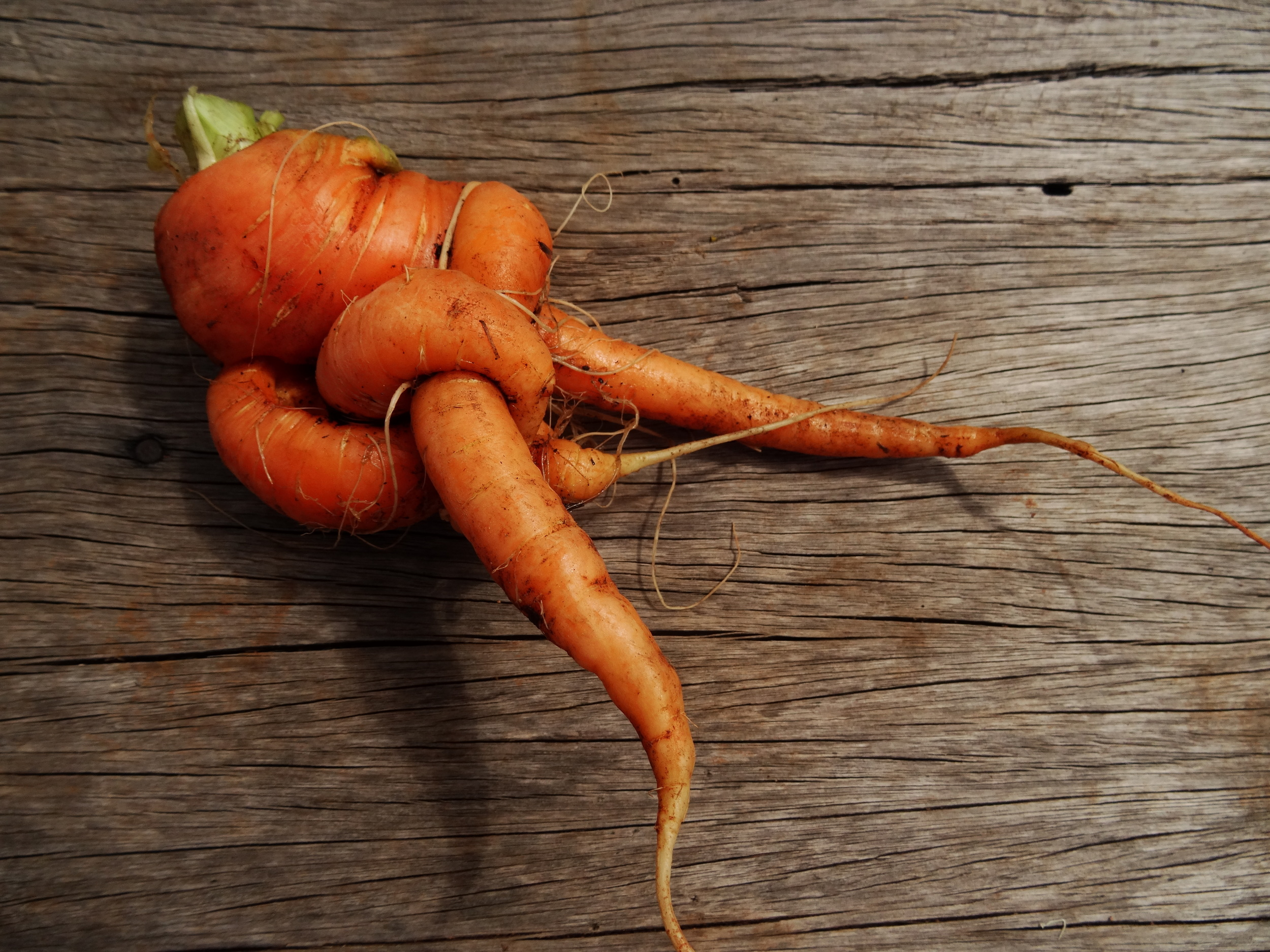 twisted carrot.JPG