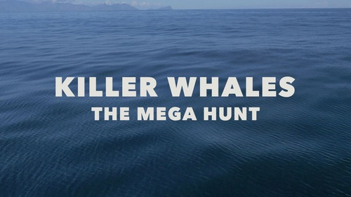 Table Mountain Films for Animal Planet